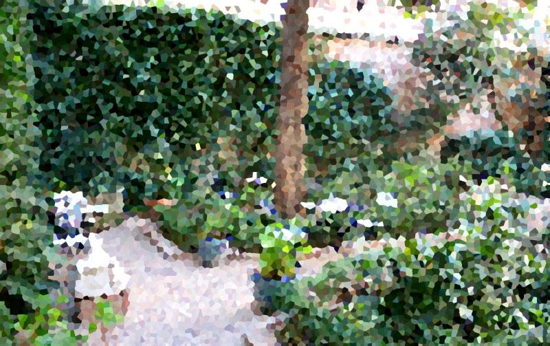 Café del Jardín