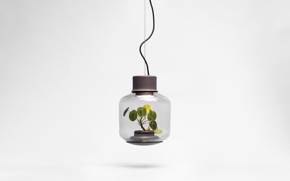 La lámpara terrario: un nuevo concepto de Nui Studio