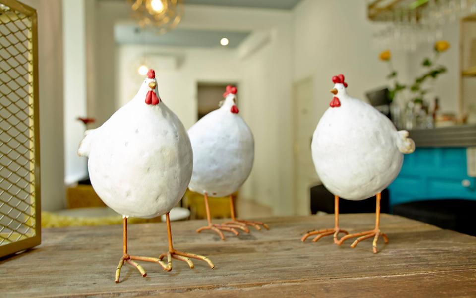 pollo-4