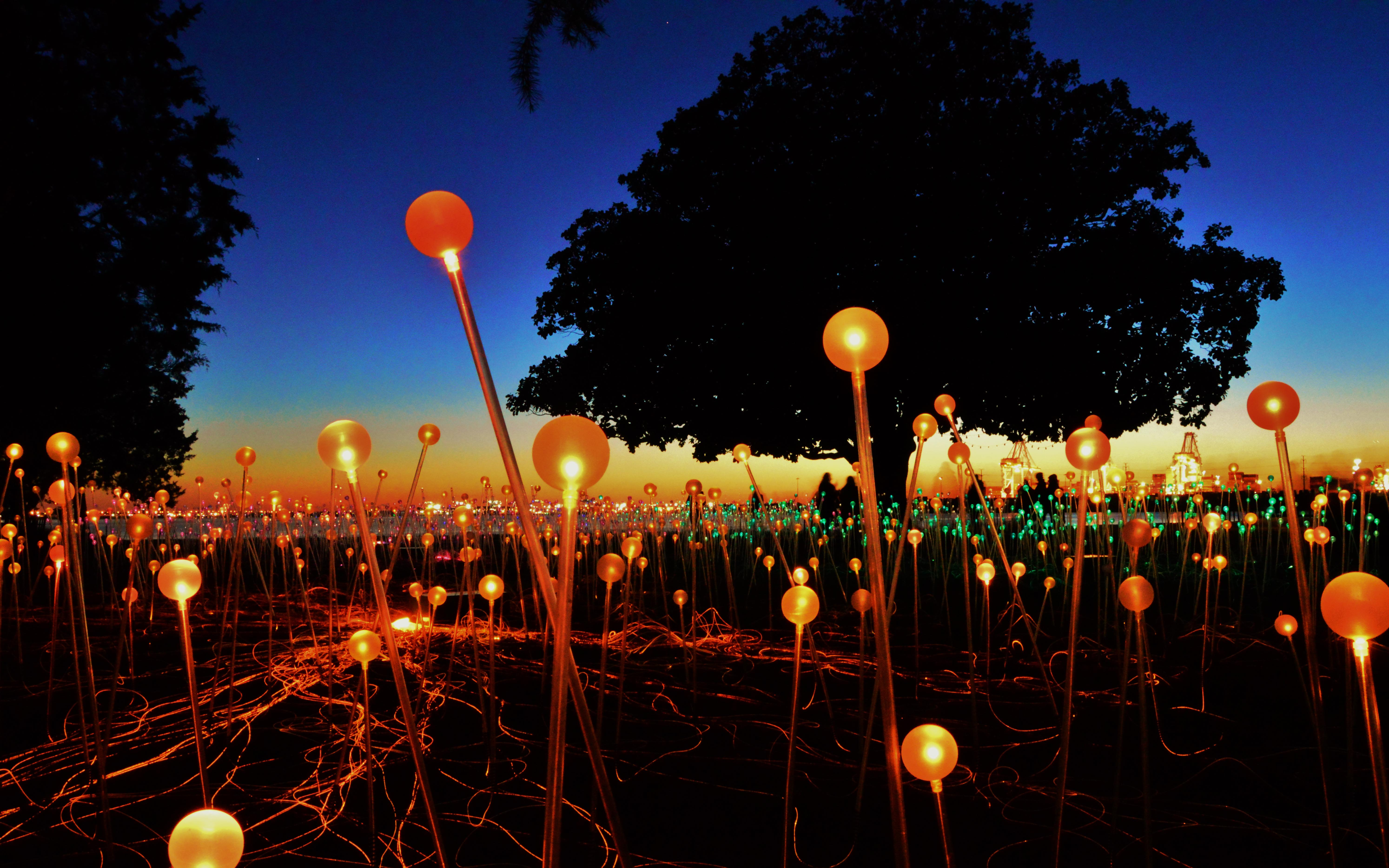 bruce_munro_s__field_of_lights___norfolk__va_by_schaex-d8devrw