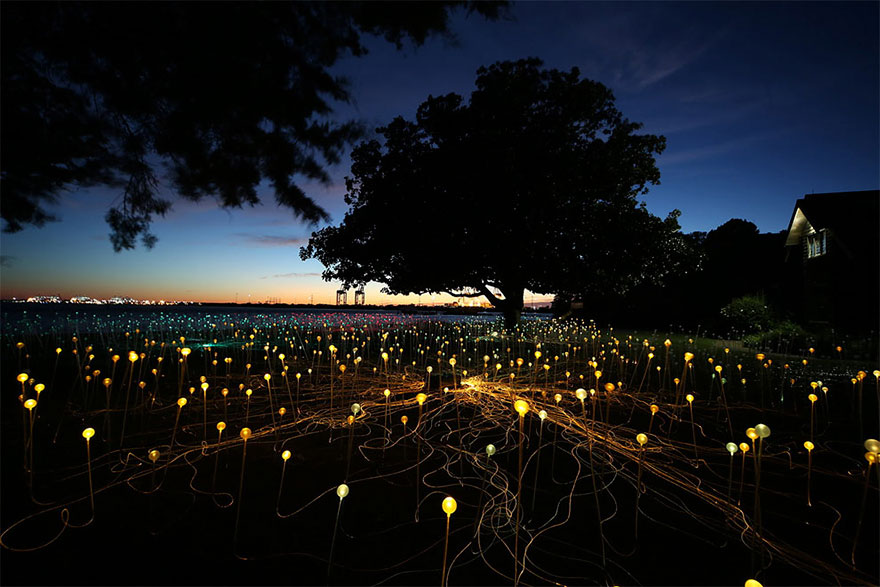 surreal-light-installations-field-of-light-bruce-munro-uluru-australia-13