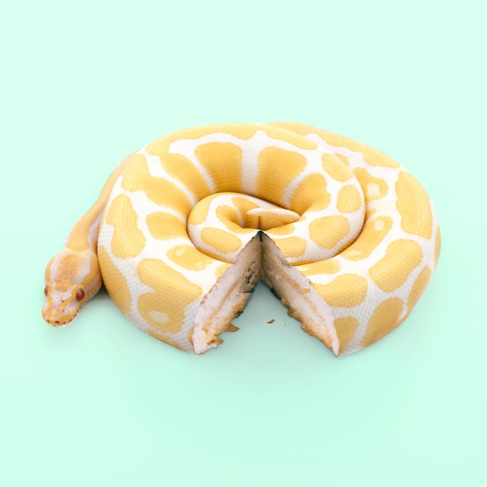 snakecake