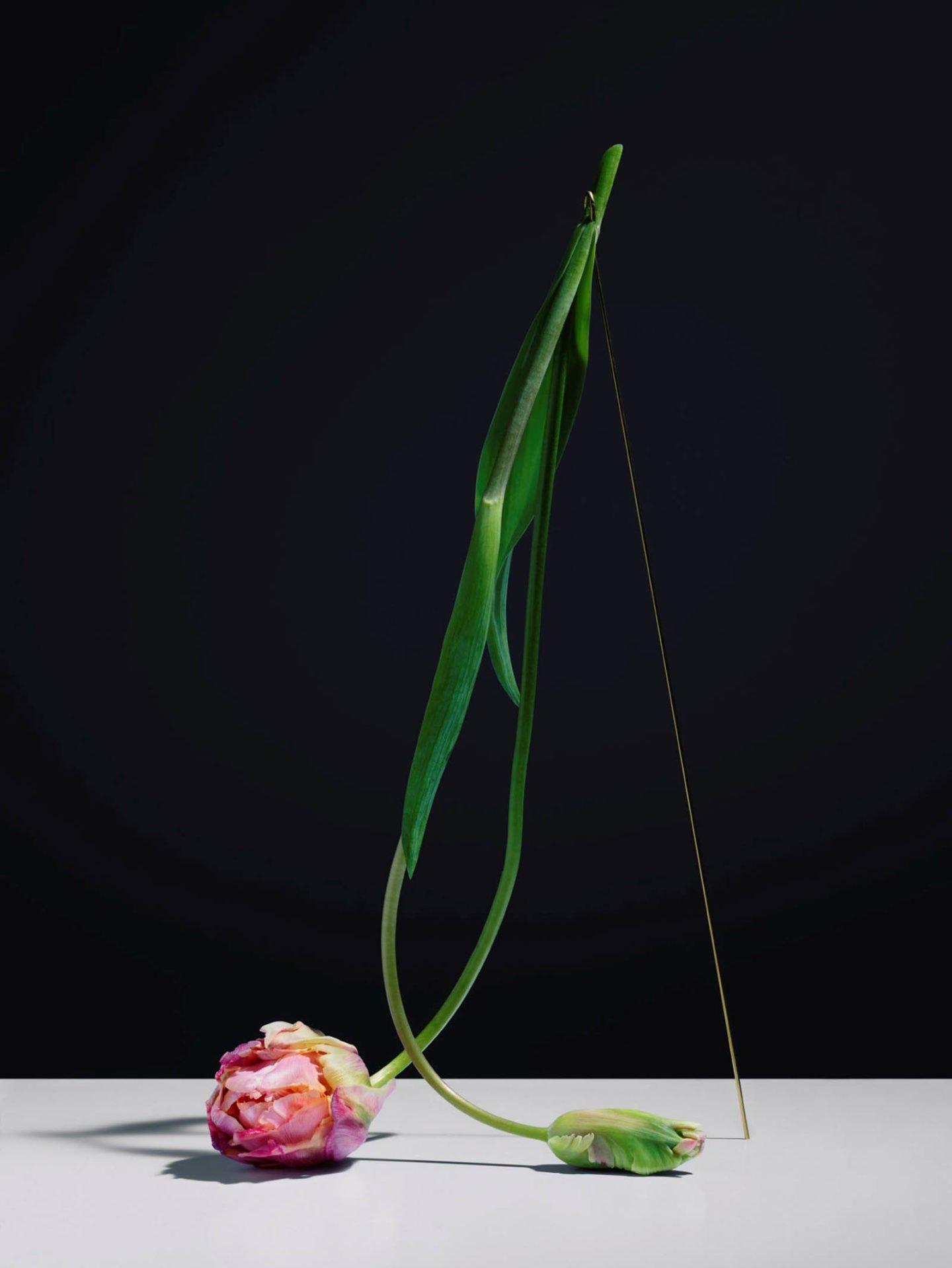 ignant-art-carl-kleiner-postures-006-1440x1919