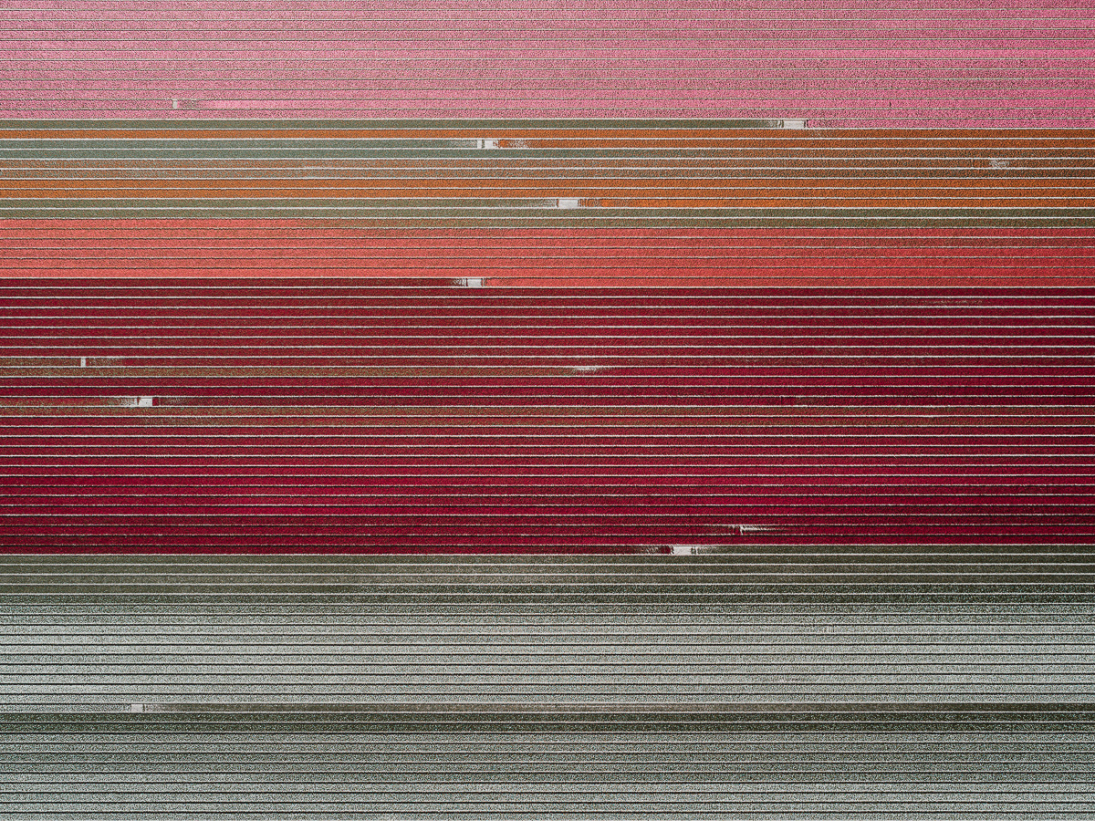 'The Tulip Series', de Tom Hegen