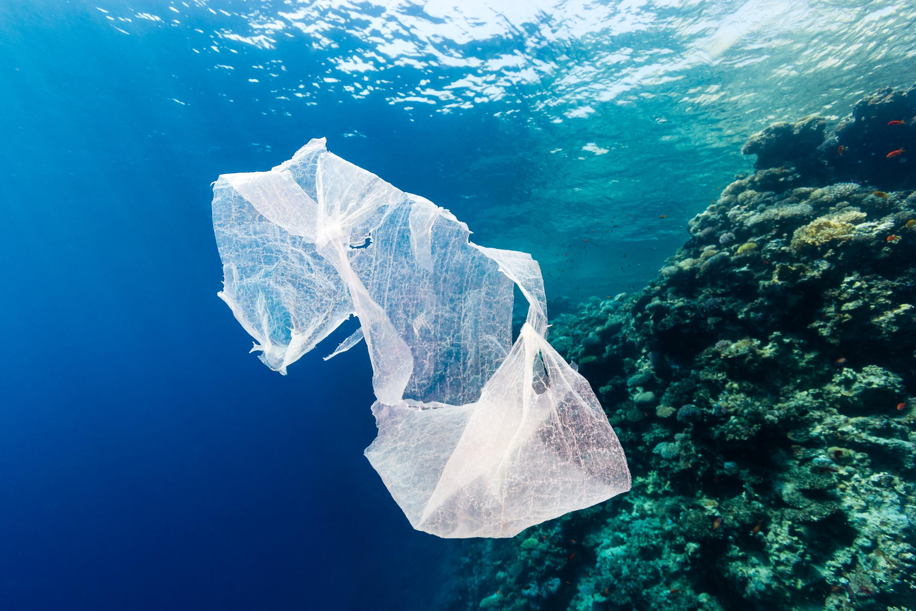 [ Ecologismo ] @byebyestraws y la sensibilización ecológica a través de Instagram
